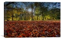 fallen leaves, Canvas Print