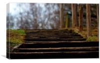 Woodland Steps, Canvas Print