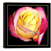 Easter Rose , Canvas Print