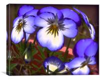 Painted Pansies , Canvas Print