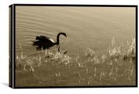 Sepia Swan , Canvas Print