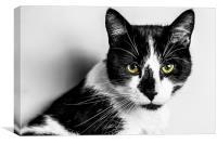 Kitten, Canvas Print