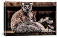 Lemur, Canvas Print