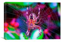 A spider of a different kind., Canvas Print