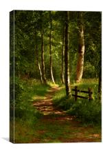 Sunlight in the forest, Canvas Print
