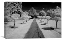 Infrared tree lined path, Canvas Print