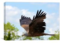 Red Kite , Canvas Print