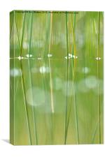Grass Reflection, Canvas Print