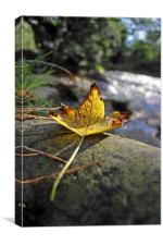 Autumn Leaf, Canvas Print