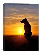 Bruno,At,Sunrise, Canvas Print