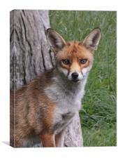 Red Fox UK, Canvas Print