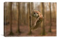 Tawny Owl On The Hunt, Canvas Print