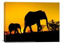 Elephant Silhouette , Canvas Print