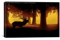 Red Deer Cervus Elaphus The Call Of the Wild, Canvas Print