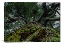 Canopy, Canvas Print