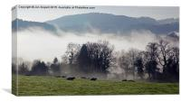 Cows In The Mist, Canvas Print