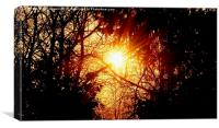 Sunflare Forest, Canvas Print