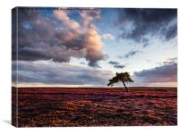 Lone Tree, Egton Moor , Canvas Print