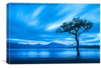 Lone Tree, Milarrochy Bay , Canvas Print