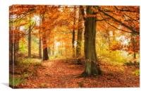 Autumn Woodland , Canvas Print