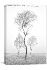 Three Trees, Canvas Print