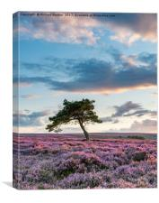 Sunset at the Lone Tree, Canvas Print