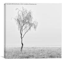 Misty Birch Tree, Canvas Print