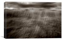 Grass In Flux, Canvas Print