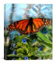 Pacific Grove Butterfly, Canvas Print