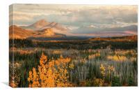 Autumn in Denali, Canvas Print