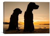 Dogs in the sunset, Canvas Print