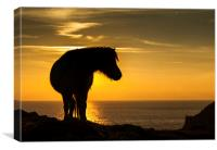 Wild Welsh Pony's, Canvas Print