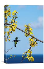 Humming Birds, Canvas Print