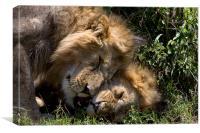 Lions, Canvas Print