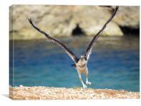 Osprey Bird of prey, Canvas Print