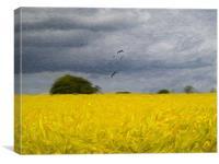 Rape Field Impressionist, Canvas Print