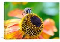 Bee, Canvas Print