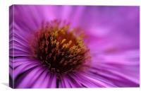 Purple, Canvas Print