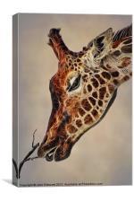 Giraffa camelopardalis, Canvas Print