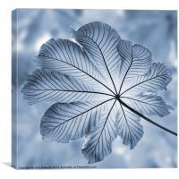 Cyanotype, Rain-forest leaf