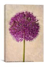 Textured Allium, Canvas Print