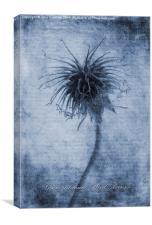 Geum urbanum Cyanotype, Canvas Print
