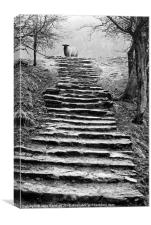 Dovedale steps, Canvas Print
