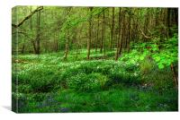 Ramsons and Bluebells, Canvas Print