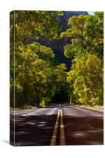 Tree Tunnel, Canvas Print