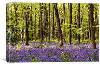 Micheldever Blue, Canvas Print