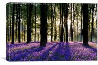Bluebell Dawn - 3, Canvas Print