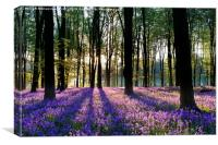 Bluebell Dawn - 2, Canvas Print