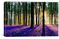 Bluebell Dawn - 5, Canvas Print