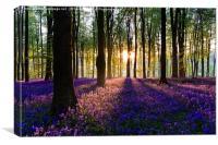 Bluebell Dawn - 6, Canvas Print